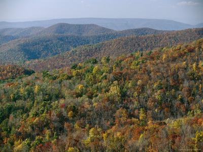 Fall Colors in Forests Along Tanners Ridge, with View of Massanutten Mountain-Raymond Gehman-Photographic Print