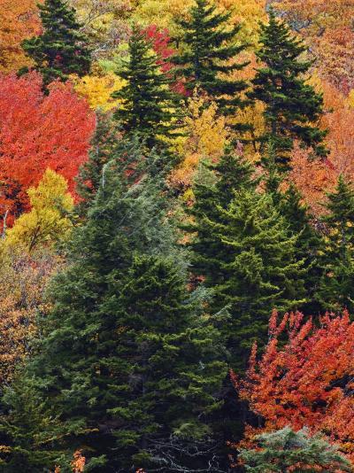 Fall Colors in the Southern Appalachian Mountains, North Carolina, USA-Adam Jones-Photographic Print