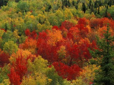 Fall Colors in Wassataquoik Valley, Northern Hardwood Forest, Maine-Jerry & Marcy Monkman-Photographic Print