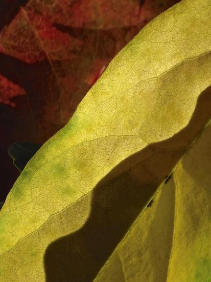Fall Colors IV-Monika Burkhart-Photographic Print