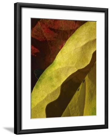 Fall Colors IV-Monika Burkhart-Framed Photographic Print