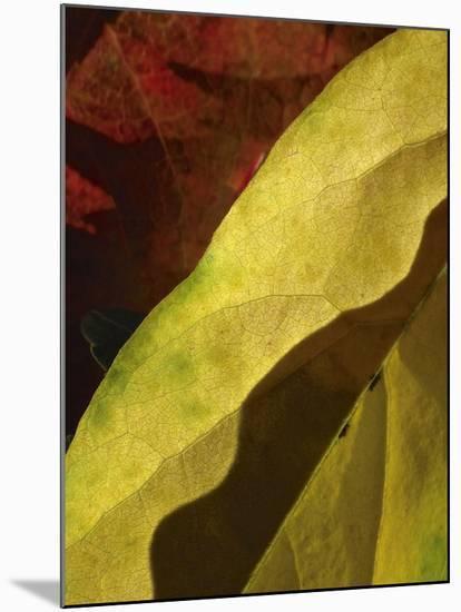 Fall Colors IV-Monika Burkhart-Mounted Photographic Print