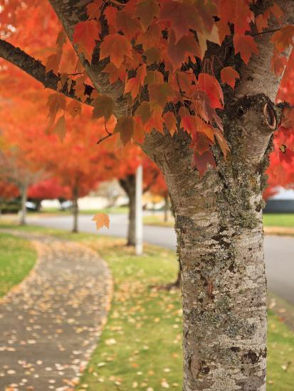 Fall Colors, Keizer, Oregon, USA-Rick A^ Brown-Photographic Print
