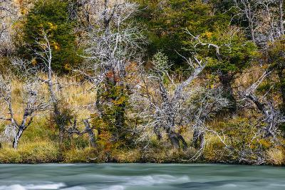 Fall Colors On Southern Beach Along The Rio Paine In Torres Del Paine NP, Patagonia, Chile-Jay Goodrich-Photographic Print