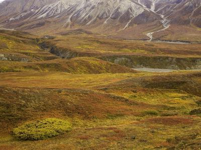 Fall colors on the tundra in Denali National Park-John Eastcott & Yva Momatiuk-Photographic Print