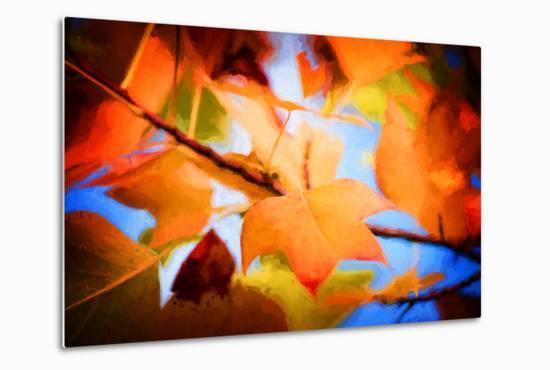 Fall Colors Update-Philippe Sainte-Laudy-Metal Print