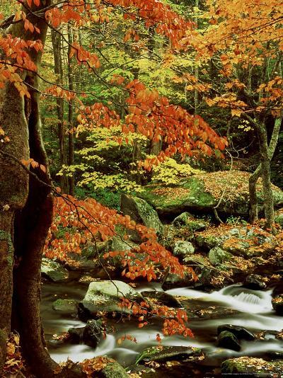 Fall Colour Along Middle Prong of Little River, USA-Willard Clay-Photographic Print