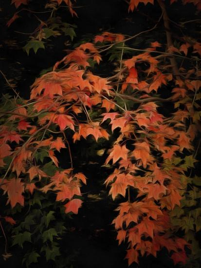 Fall Colours 2-Dorothy Berry-Lound-Giclee Print