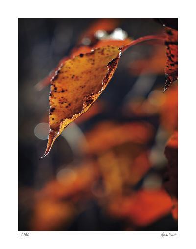 Fall Flames-Michelle Wermuth-Giclee Print