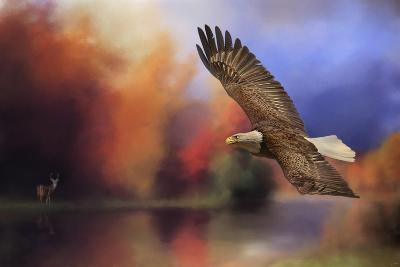 Fall Flight Bald Eagle-Jai Johnson-Giclee Print