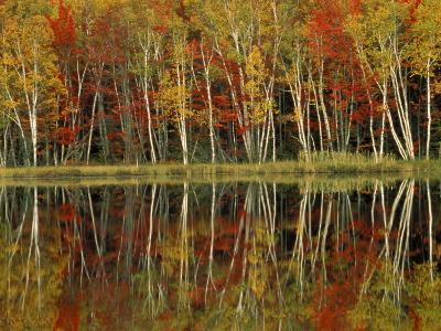 Fall Foliage and Birch Reflections, Hiawatha National Forest, Michigan, USA-Claudia Adams-Photographic Print
