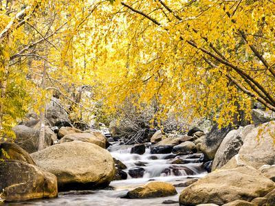 https://imgc.artprintimages.com/img/print/fall-foliage-at-creek-eastern-sierra-foothills-california-usa_u-l-pxqpzq0.jpg?p=0
