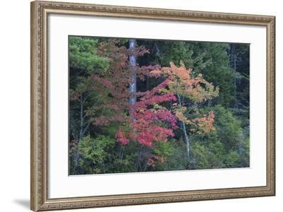 Fall Foliage at Eagle Lake at Sunrise-Gabby Salazar-Framed Photographic Print