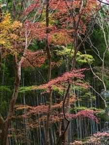 Fall Foliage at Ginkaku-Ji Temple, Kyoti Prefecture, Japan