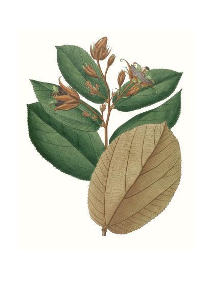 Fall Foliage III-0 Unknown-Art Print