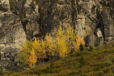 Fall Foliage in Denali National Park, Alaska-Charles Smith-Photographic Print
