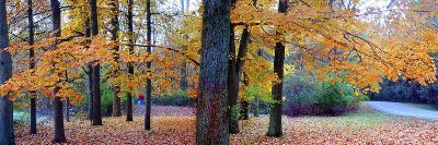 Fall foliage in Eagle Creek Park, Indianapolis, Indiana, USA-Anna Miller-Photographic Print
