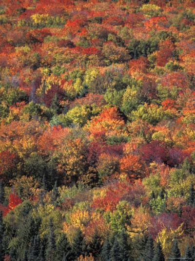 Fall Foliage in New Hampshire's White Mountains-Richard Nowitz-Photographic Print