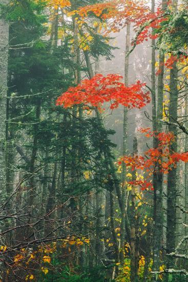 Fall Foliage in the Mist, Maine, New England-Vincent James-Photographic Print