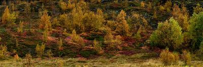Fall Foliage in Thingvellir National Park, Iceland-Raul Touzon-Photographic Print