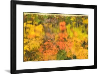 Fall Foliage Reflected on the Rippling Surface of a Pond-Darlyne A. Murawski-Framed Photographic Print