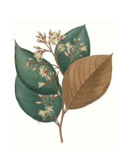 Fall Foliage V-0 Unknown-Art Print