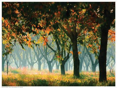 Fall Forest- Zsolnai-Art Print