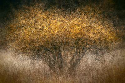Fall Impression-Ursula Abresch-Photographic Print