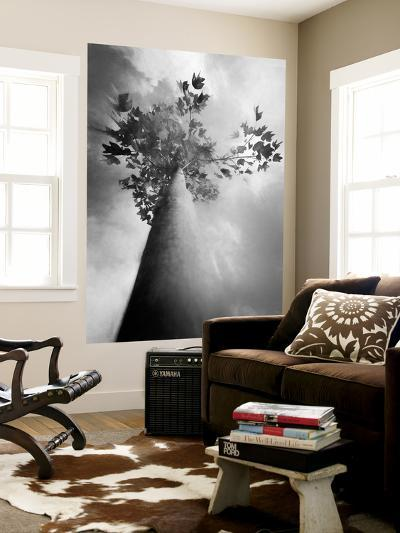 Fall Is in the Air-Philippe Sainte-Laudy-Wall Mural