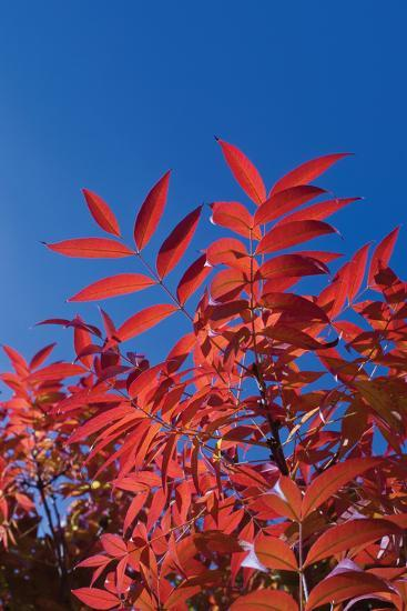 Fall Leaves 3-Lee Peterson-Photographic Print