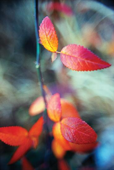 Fall Leaves I-Bob Stefko-Photographic Print