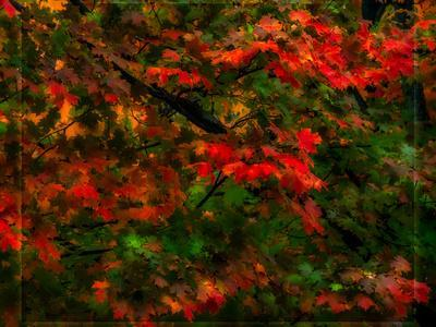 https://imgc.artprintimages.com/img/print/fall-leaves_u-l-q19me0r0.jpg?p=0