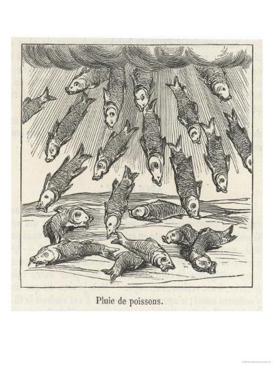 Fall of Fish--Giclee Print