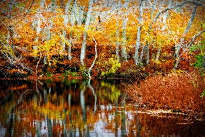 Fall Pond Colors 1-Jobe Waters-Giclee Print