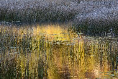 Fall Reflections in a Marsh, Acadia National Park, Maine, USA-Joanne Wells-Photographic Print
