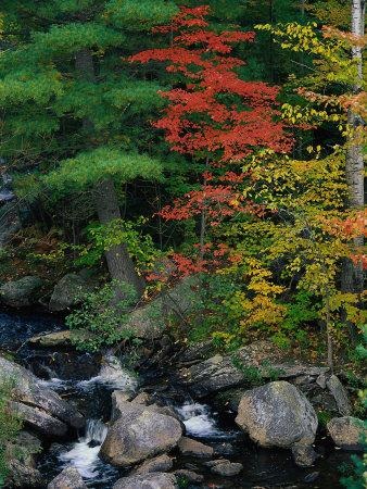 Fall Scenic, Acadia National Park, Maine-Elizabeth DeLaney-Photographic Print
