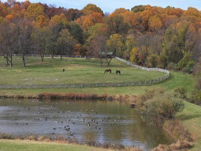 Fall Scenic of Horse Farm and Pond with Canada Geese-George Grall-Photographic Print