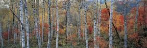 Fall Trees, Shinhodaka, Gifu, Japan