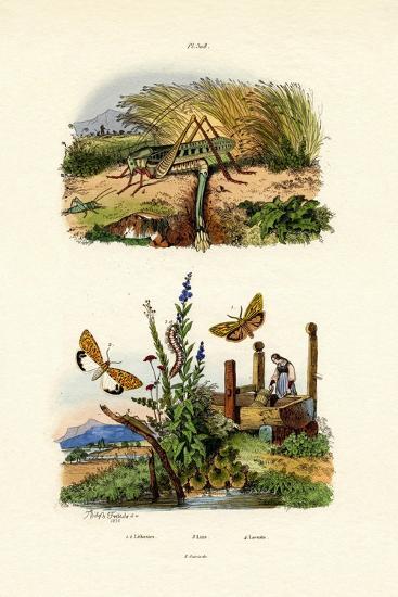 Fall Webworm Moth, 1833-39--Giclee Print