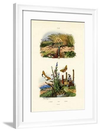 Fall Webworm Moth, 1833-39--Framed Giclee Print