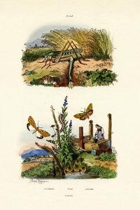 Fall Webworm Moth, 1833-39
