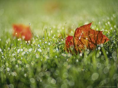 Fallen Autumn Leaf, Scotland-Iain Sarjeant-Photographic Print
