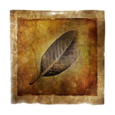 Fallen I-Ryan Hartson-Weddle-Photographic Print