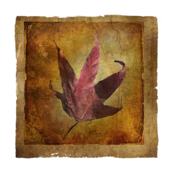 Fallen II-Ryan Hartson-Weddle-Photographic Print