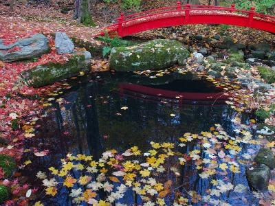 Fallen Leaves from Japanese Maples Floating in a Pond, New York-Darlyne A^ Murawski-Photographic Print