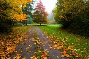 Fallen Leaves on a Road, Washington State, USA