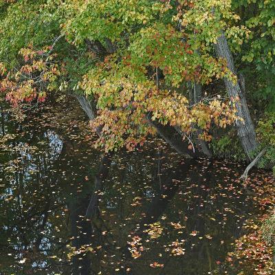 Fallen Leaves on Little Androscoggin River, New Hampshire, Usa-Tim Fitzharris-Photographic Print