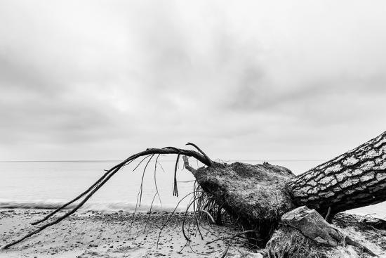 Fallen Tree on the Beach after Storm. Sea on a Cloudy Day. Black and White, far Horizon.-Michal Bednarek-Photographic Print