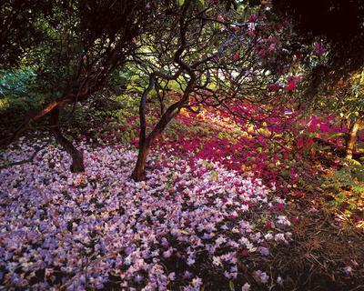https://imgc.artprintimages.com/img/print/falling-flowers_u-l-f8mayr0.jpg?p=0