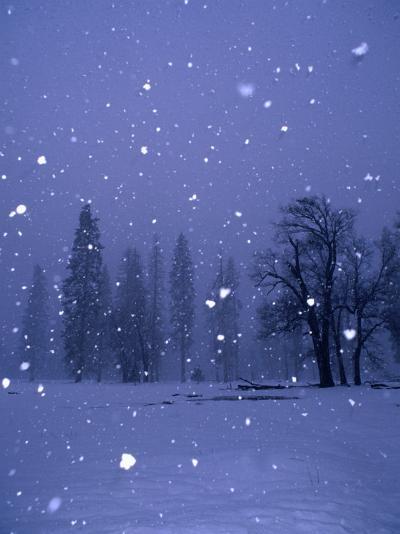 Falling Snow, Yosemite National Park, California, USA-Thomas Winz-Photographic Print